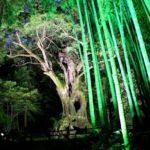 夏だけ期間限定のイベント。九州でがんばってます!!<br>佐賀県・武雄市で「武雄のあかり展」を開催します