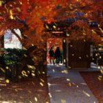 佐賀県基山町、紅葉の名所である大興善寺で「きやま門前市」が初開催!