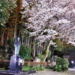 平成の桃源郷 宮崎県西米良村(にしめらそん)  10,000本の桜の里づくりを目指し9000本突破
