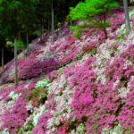 佐賀県基山町のつつじ寺大興善寺で「きやま門前市」開催